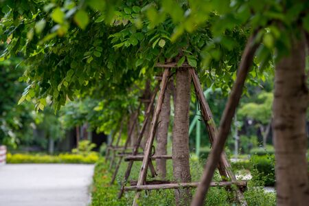 and the stakes: Trees with support stakes planted in rows in an urban park. Urban green lifestyle concept.