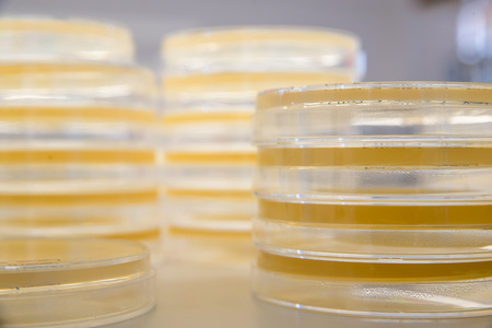 agar: Stacks of sterile agar plates, also known as petri dishes, ready to be used for bacterial culture. Science and medicine concept.