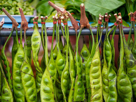 Closeup macro detail of multiple pods of Stink Beans (Parkia speciosa) sold at an open market. Chonburi, Thailand. Travel and authentic cuisine. Banco de Imagens