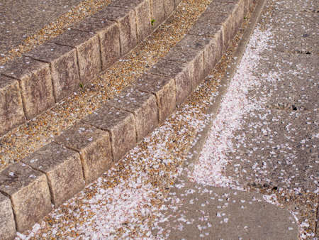 Closeup detail of fallen Sakura flower petals along the steps of a public street. Arashiyama, Ukyo-Ku, Kyoto, Japan. Travel and Hanami cherry blossom season.