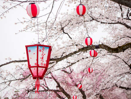Closeup of a wooden and paper lanterns hanging on the branches of cherry blossom trees. Writing translates to Sakura Festival. Nagoya, Japan. Travel and Hanami.