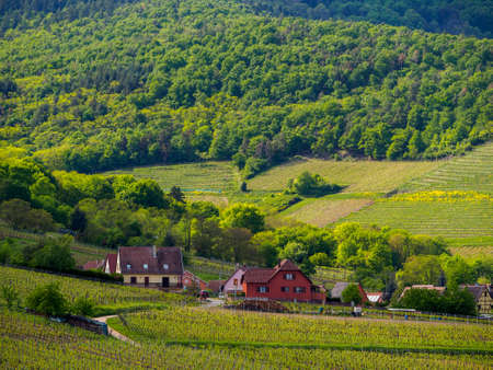 Traditional houses of the valley village of Niedermorschwihr, France, on a sunny spring day. Alsace wine route. Travel and winemaking industry.