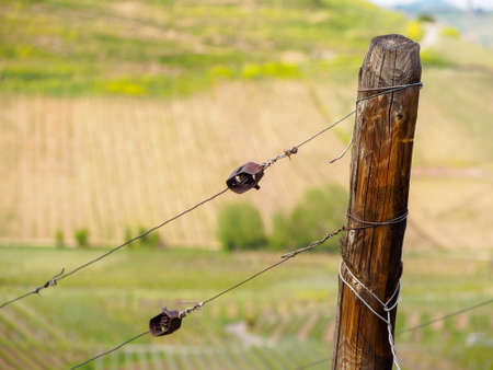 Closeup of a wooden pole and wires supporting a grapevine trellis. Turckheim, France. Agriculture and winemaking industry. Stock Photo