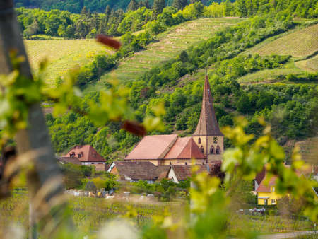 Wide closeup of the parish Church with the Crooked Spire at the valley town of Niedermorschwihr, through the grapevines. Haut-Rhin, France. Alsace wine route. Stock Photo