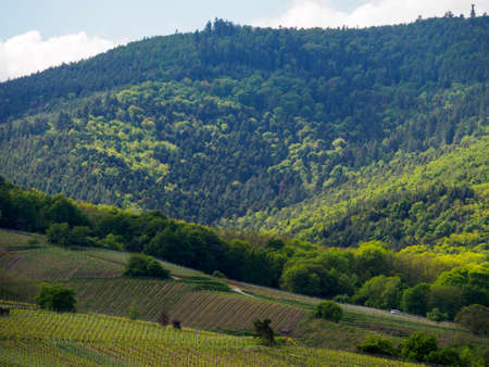 Wide view of a valley and hills in the hazy shade of the clouds, Niedermorschwihr, France