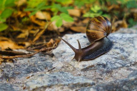 달팽이는 눈에 뚜렷하게 보입니다. 그리고 부드러움과 함께 움직이기 때문에 언젠가는 게으른 동물처럼 느껴질 것입니다. 그러나 등반에는 잘됩니다. 스톡 콘텐츠