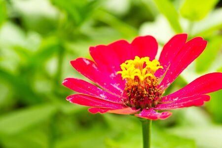 Flower Stock Photo - 13955324