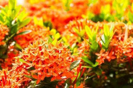Flower spike photo