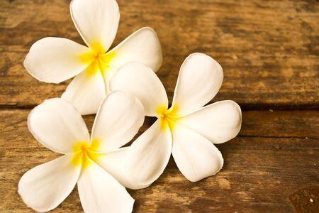 thom: Lan Thom Flowers Stock Photo