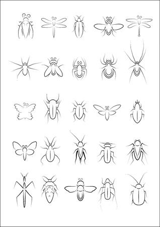 Collection of insect vector Vector