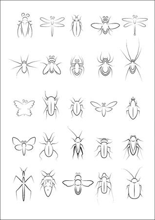 gottesanbeterin: Sammlung von Insektenvektors Illustration