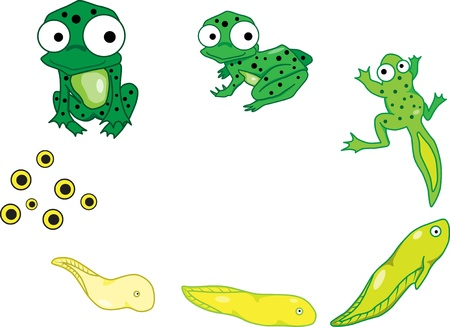 cartoon larva: The life cycle of the frog