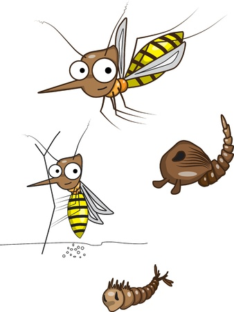 cartoon larva: The life cycle of the mosquito Stock Photo