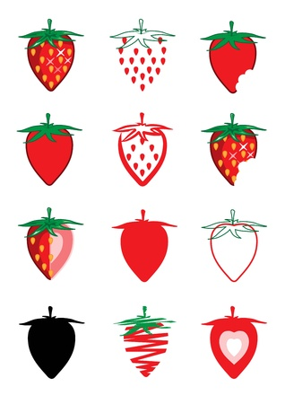wild strawberry:  Collection of strawberry    Illustration