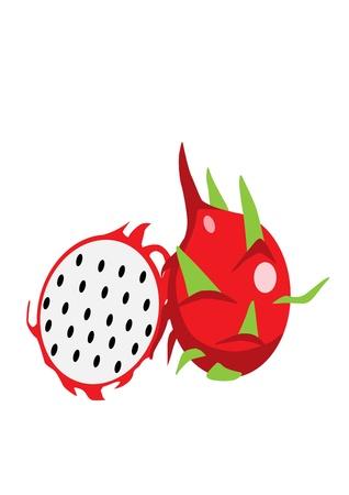 dragon fruit: Dragon fruit  Illustration