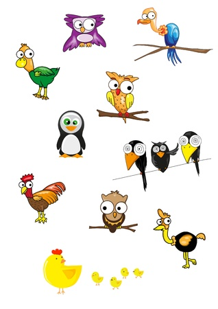 Collection of birds vector  Vector