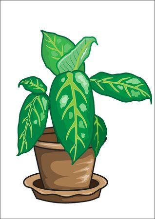 houseplant: Dieffenbachia vector