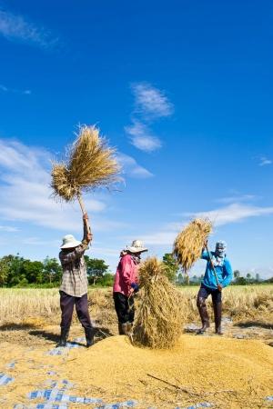 Farmer in the field combine  Redakční