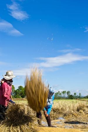 Farmer in the field combine  Stock Photo