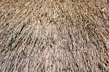 Dry grass background Stock Photo - 17203074