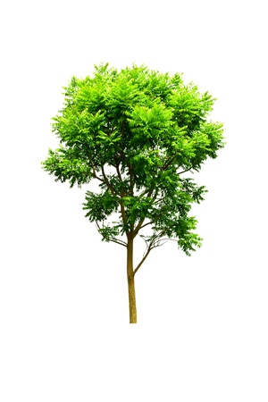 Tree isolate on a white background Imagens