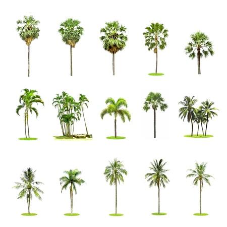 Set of palm and coconut trees on white background Reklamní fotografie