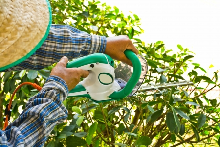 Gardener cutting a bush photo