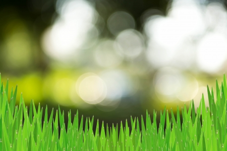 background  grass: Abstract background grass Stock Photo