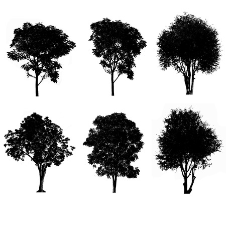 nature silhouette: Set of silhouettes of trees Stock Photo