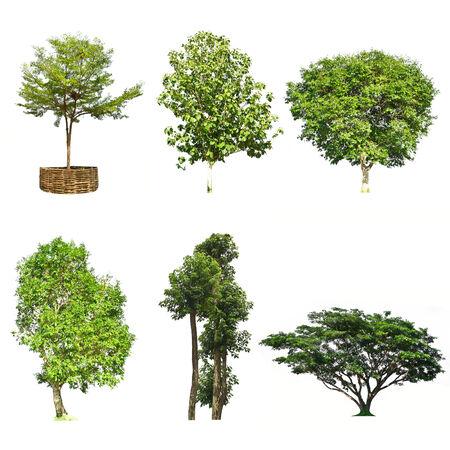 Set of trees isolated on white background photo