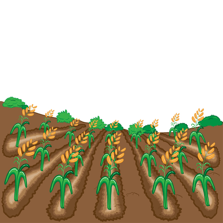 harvesting rice: Raw of rice vector illustration cartoon
