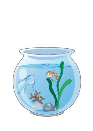 gold fish bowl: Fish in the aquarium. vector illustration