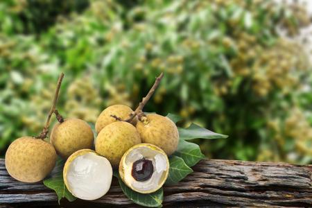 Longan orchards - Longan fruits on tree photo