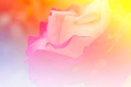 background designs: beautiful flowers made with color filters, nature background