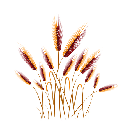 Vector illustration of floral background. flower grass in white background