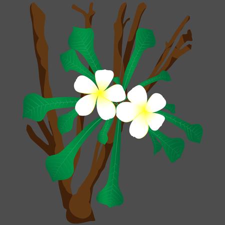 Vector illustration of Frangipani flowers background. background of flower
