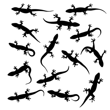 silhouette of gecko, lizard on white background. vector illustration