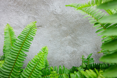 Beautiful green fern is beside the wall Stock Photo
