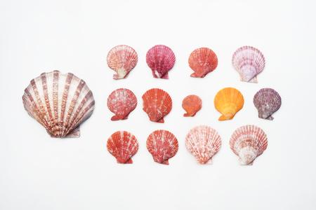 Shells isolated on white background Stock Photo