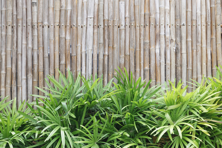 close up of bamboo wall texture for background Stock Photo