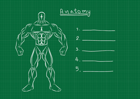 Male Anatomy Front Reference  Vector