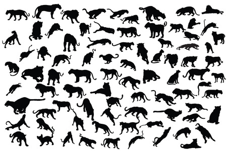 silueta tigre: colección tigre y león silueta