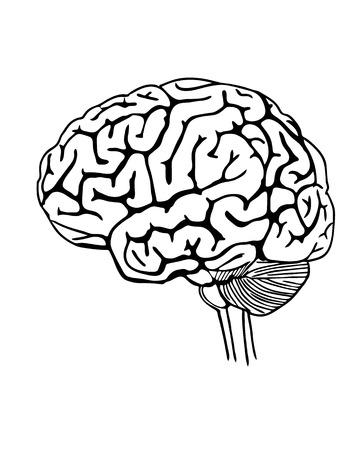 cerebro blanco y negro: Ilustración vectorial esbozo de cerebro humano en el fondo blanco