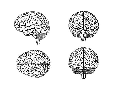 cerebro blanco y negro: Ilustración vectorial esbozo de cerebro humano