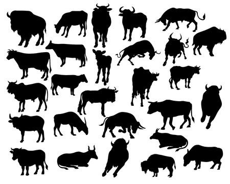 ox: bull silhouettes on the white background Illustration