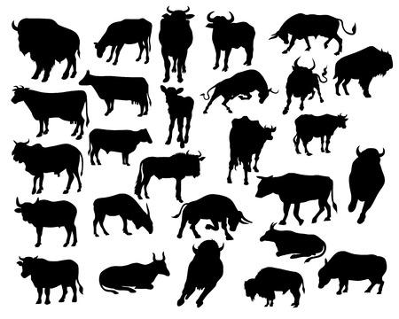 herd: bull silhouettes on the white background Illustration