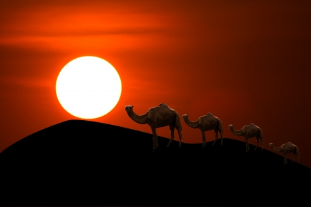 sunset in desert with camel caravan going through the sand dunes  photo