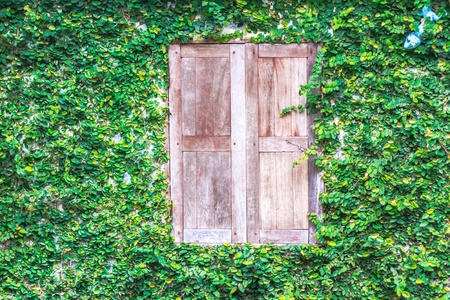 creeping plant: View of a closed wood window and of a wall covered with ivy Stock Photo