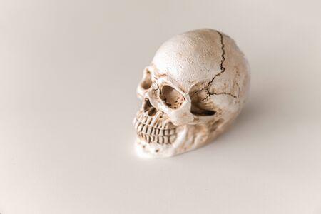 white skull isolated on white background