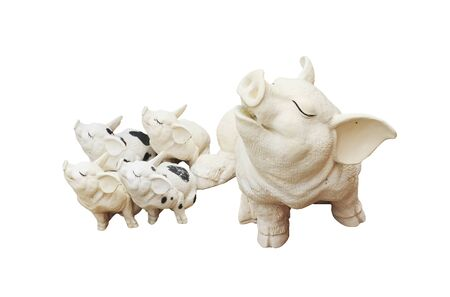 Pigs family isolated over a white background. photo
